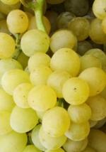 raisin phytothérapie
